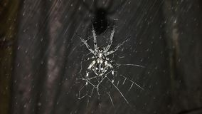 Spider hd Wallpaper. Beautiful spider hd Wallpaper Royalty Free Stock Photo