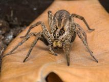 Spider with her egg sack stock image