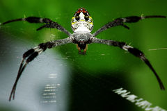 Spider in her spiderweb Royalty Free Stock Photography