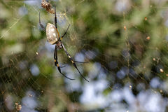 Spider on her wab. A spider on the moove en her web Royalty Free Stock Photo