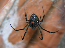 A spider in her web. Spider on his web Royalty Free Stock Photo