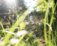 Spider in the grass of the Woodland. Spider hidden in its spider web in the grass of the woodland Stock Images