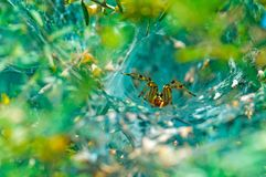 Spider Hiding Royalty Free Stock Photo