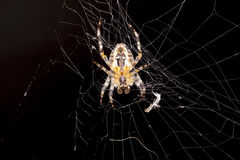 Spider and his house. Make in net Stock Photo