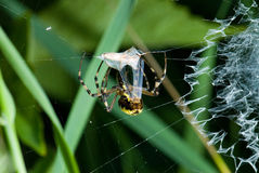 Spider in his net. Close up photo Stock Photography