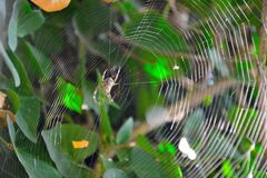 Spider and his nicely woven web. Close-up Stock Images