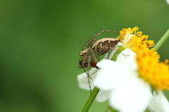 Spider and his prey. Royalty Free Stock Photos