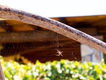 A spider and his web Stock Photo