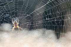 Spider and his Web royalty free stock photography