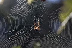 Spider in his web Stock Images