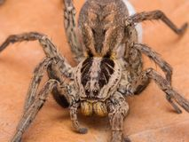 Spider with her egg sack Royalty Free Stock Photos