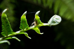 Spider holding on fern plant. Stock Images