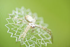 Spider in the house. A photo show the spider wth its' artistic house - spider web Stock Photos