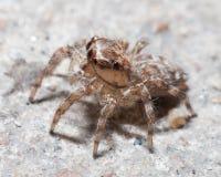 Spider  house Stock Photos