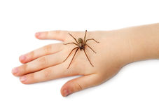 Spider on the human hand Royalty Free Stock Images