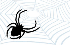 Spider the hunter. Royalty Free Stock Photos