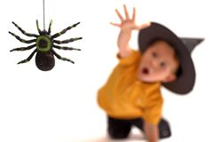 Spider hunting. Isolated image of black spider and small cute boy in witch hat on background royalty free stock photo