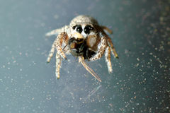 Spider Hunting on Glass Royalty Free Stock Images