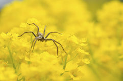 Spider. Hunting in spring flowers stock image