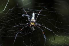Spider are hunting victims on cobweb Stock Image