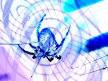 Spider illustration Royalty Free Stock Photos