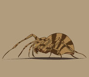 Spider  and illustration Stock Photography
