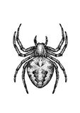 Spider illustration, engraving, drawing, ink Stock Photography