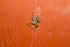Free Spider In Web Stock Image - 2826591