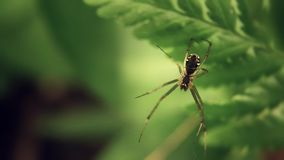 Spider. Insects world. Spider close up stock video footage