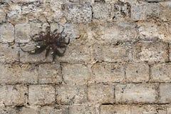 Spider?. Interesting plant shape on a brickstone wall Stock Photos