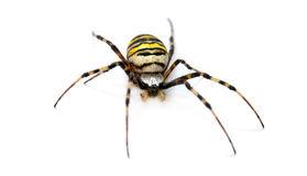 Spider isolated Stock Photos