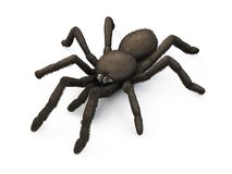 Spider isolated on white background. 3d. Stock Photos