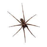 Spider isolated on white, top view Stock Photography