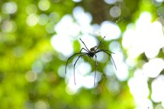 Spider in its nest. Close up of spider in its web with bokeh background Stock Image