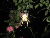 Spider and its network stock photos