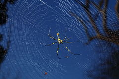 Spider in its web. In blue sky as background Stock Image