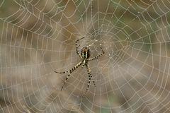 A Spider on its web. Stock Photo
