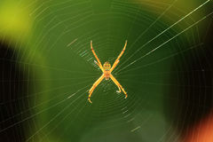 Spider on its web. Against a blurred background Royalty Free Stock Photo