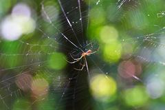 Spider on its web Royalty Free Stock Images