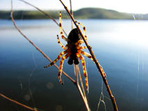 Spider on its web. Spider on a web close against the river Royalty Free Stock Photos
