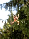 Spider on its web. Closeup of spider on its web Stock Photo