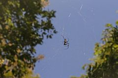 Spider in its web Royalty Free Stock Photography