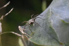 Spider on its web Stock Photos