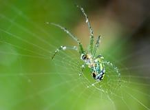 Spider a la Swarovski stock photo