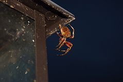 Spider on a lamp post Stock Photos