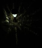spider lanter n Stock Photo