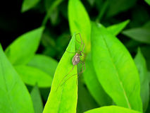 Spider on a leaf Royalty Free Stock Photography