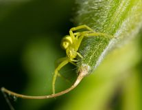 Spider on a leaf. The small spider sits on a leaf Royalty Free Stock Photos