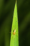 Spider on a leaf of grass Stock Photography