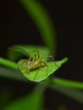 Spider. On a leaf is looking for foods Royalty Free Stock Photo